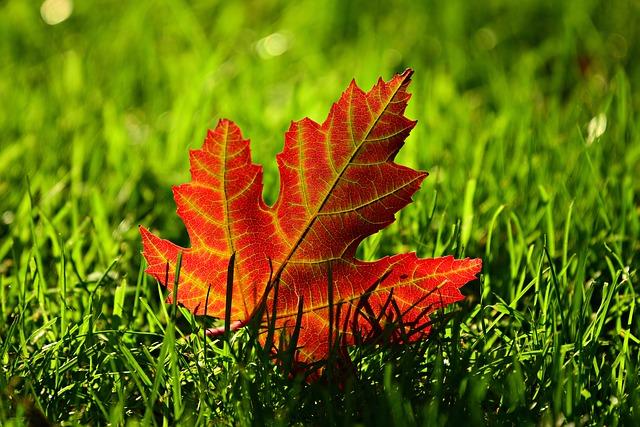 秋 葉っぱ