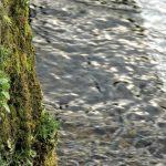 川 スピード